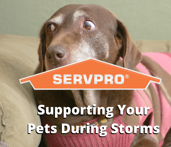 pets during storms