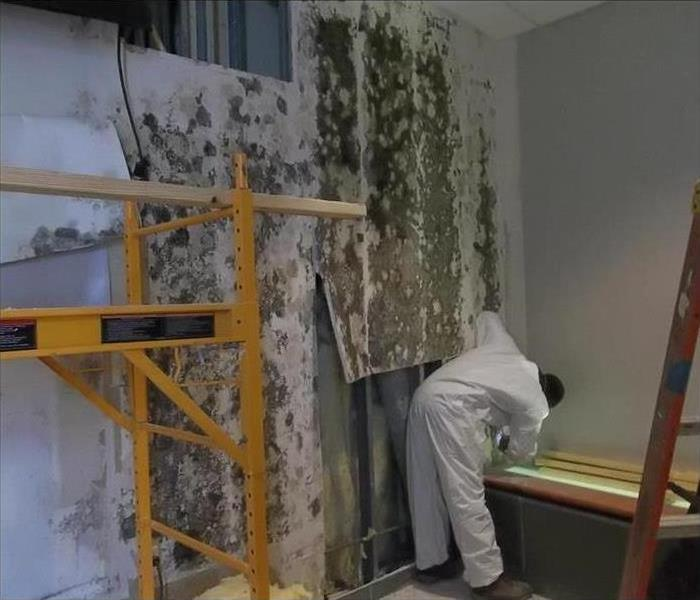 Mold Remediation Does Your Home or Business Have Mold Problems?