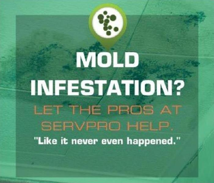 Mold Remediation Mold Cleanup Information for You and Your Family
